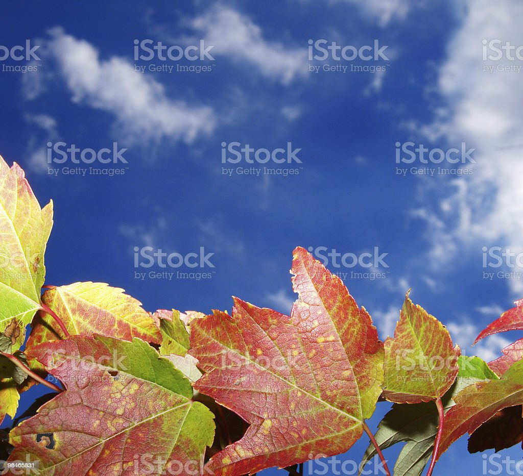 "Foliage ""autunnale foto stock royalty-free"