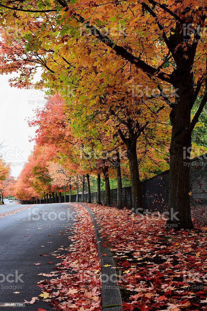 Fall Foliage Road stock photo