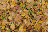 Colorful foliage in sunny woods. Autumn natural background  texture with colorful  leaves