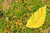 Autumn background texture with colorful  leaves. Patterns of colorful leaves on grass. Autumn Thanksgiving background