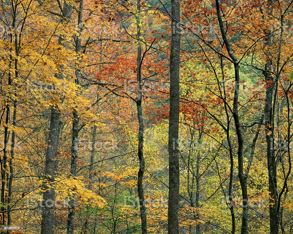 Fall Foliage, Tennessee royalty-free stock photo