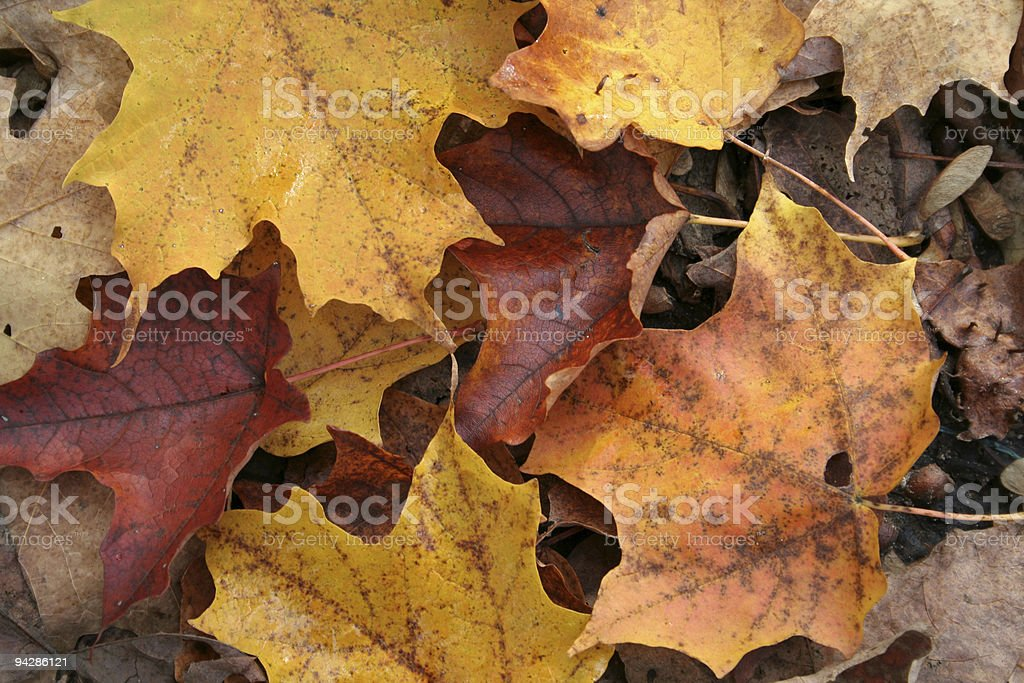 Fall Forest Floor Up Close royalty-free stock photo