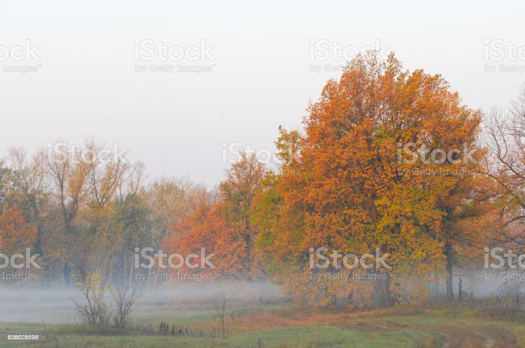Fall forest, fog, morning, evening, bright yellow sun. Rare beautiful state prirody.the period of time between midnight and noon, especially from sunrise to noon. stock photo