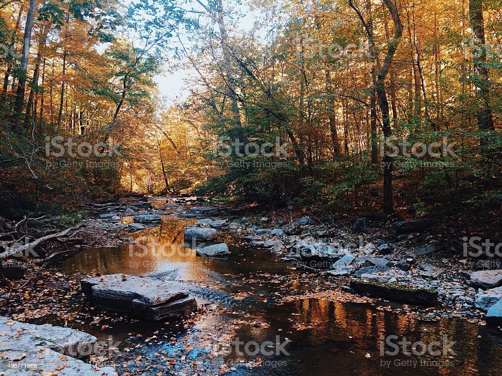 Fall forest landscape stock photo
