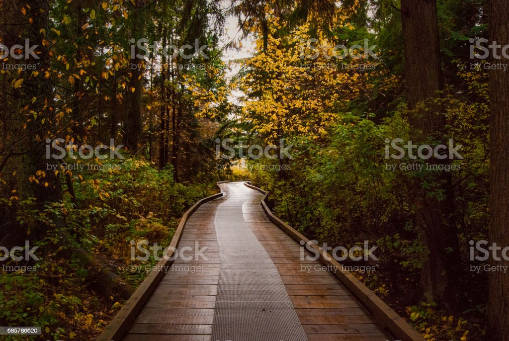 Fall Forest Walk royalty-free stock photo
