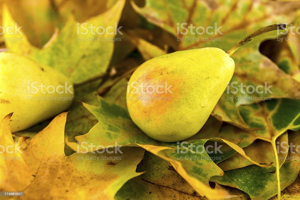 fall fruits on leaves royalty-free stock photo