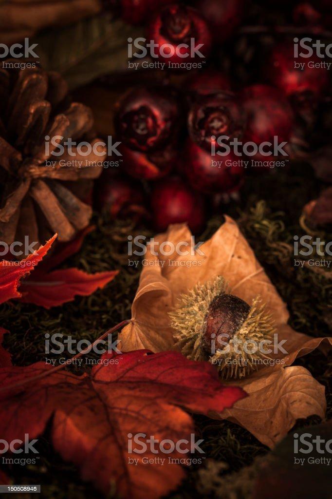 Fall Fruits royalty-free stock photo