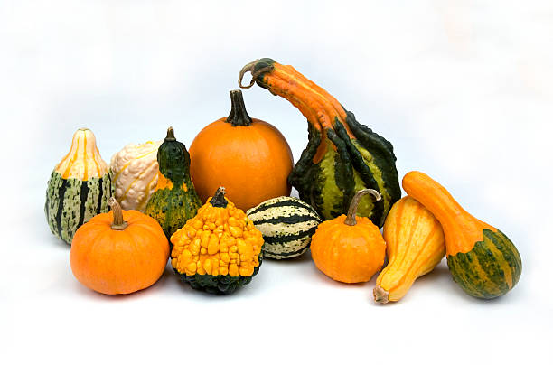fall gourds and pumpkins stock photo