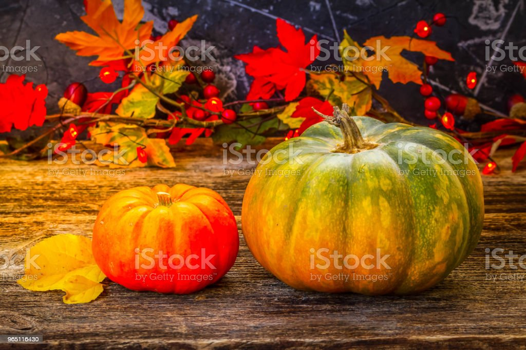 Fall harvest of pumpkins royalty-free stock photo