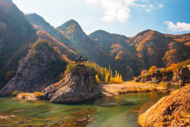 vd726 val oogst - zuid korea stockfoto's en -beelden