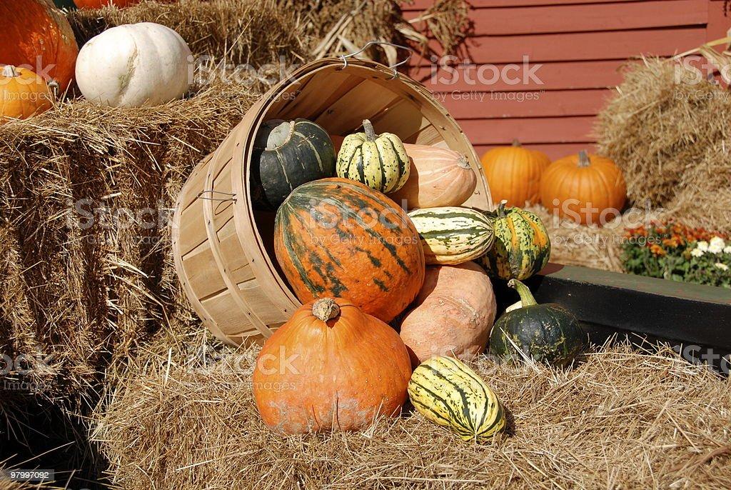 fall harvest royalty free stockfoto