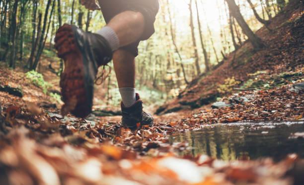 senderismo de otoño - excursionismo fotografías e imágenes de stock