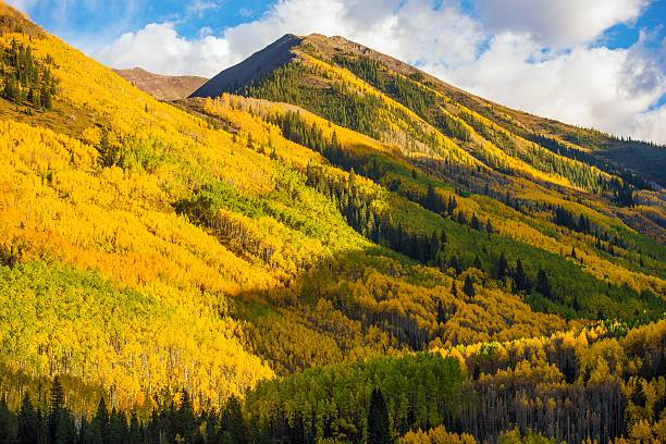 Fall Hills of Colorado Fall Hills of Colorado. Yellow Aspen Trees Forest near Aspen, Colorado, USA vail colorado stock pictures, royalty-free photos & images