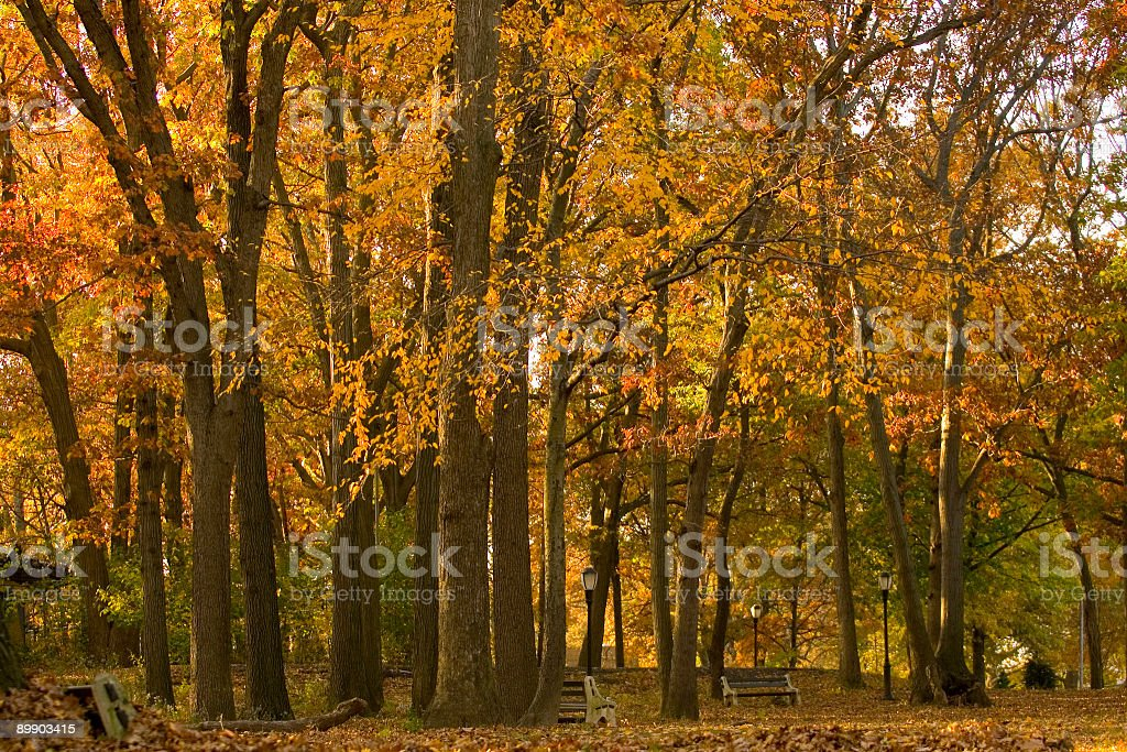 Fall in a park royalty-free stock photo