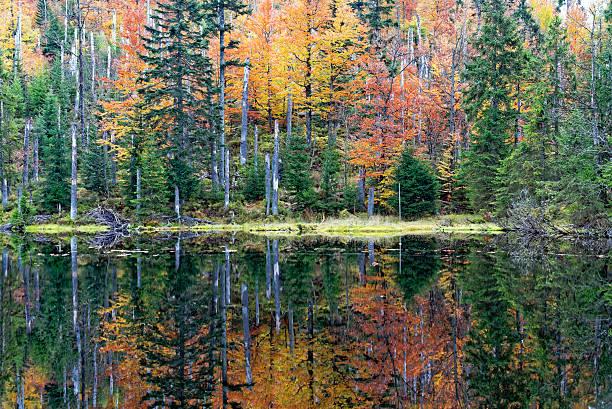 Herbst im Bayerischer Wald – Foto