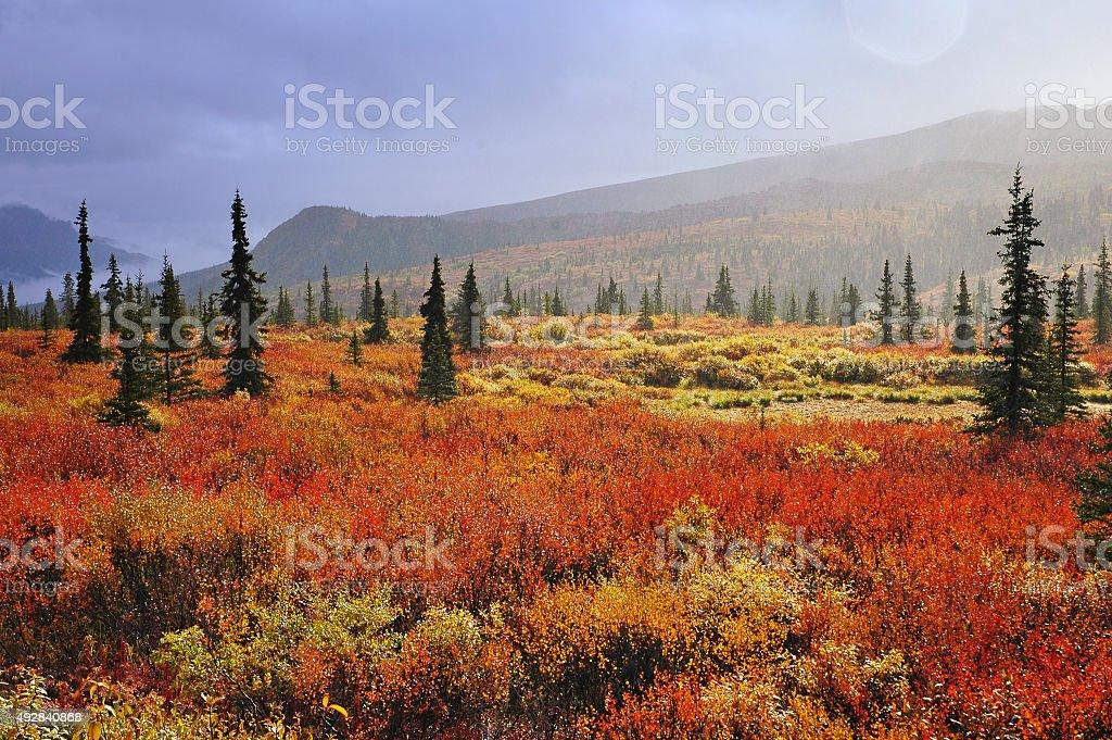 Fall in Denali National Park,Alaska stock photo