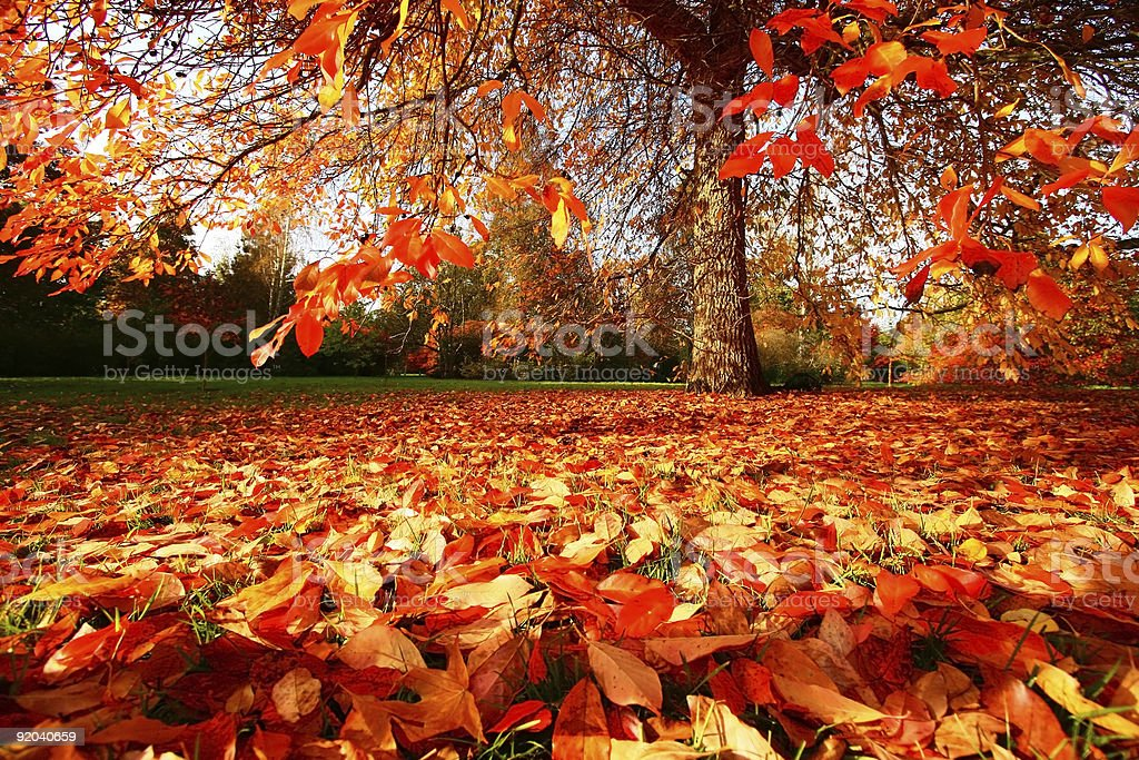 Fall in East Sussex, England stock photo