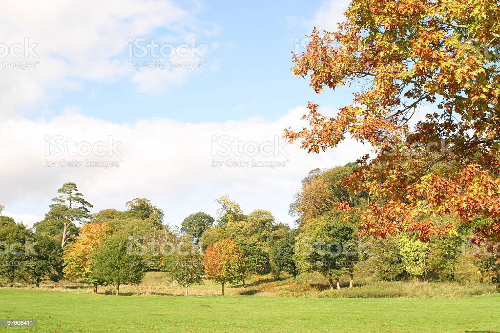 Fall in England royalty-free stock photo