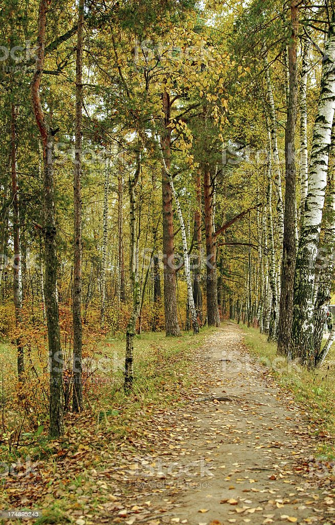 Fall in forest stock photo