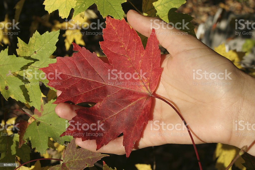Fall in Hand royalty-free stock photo