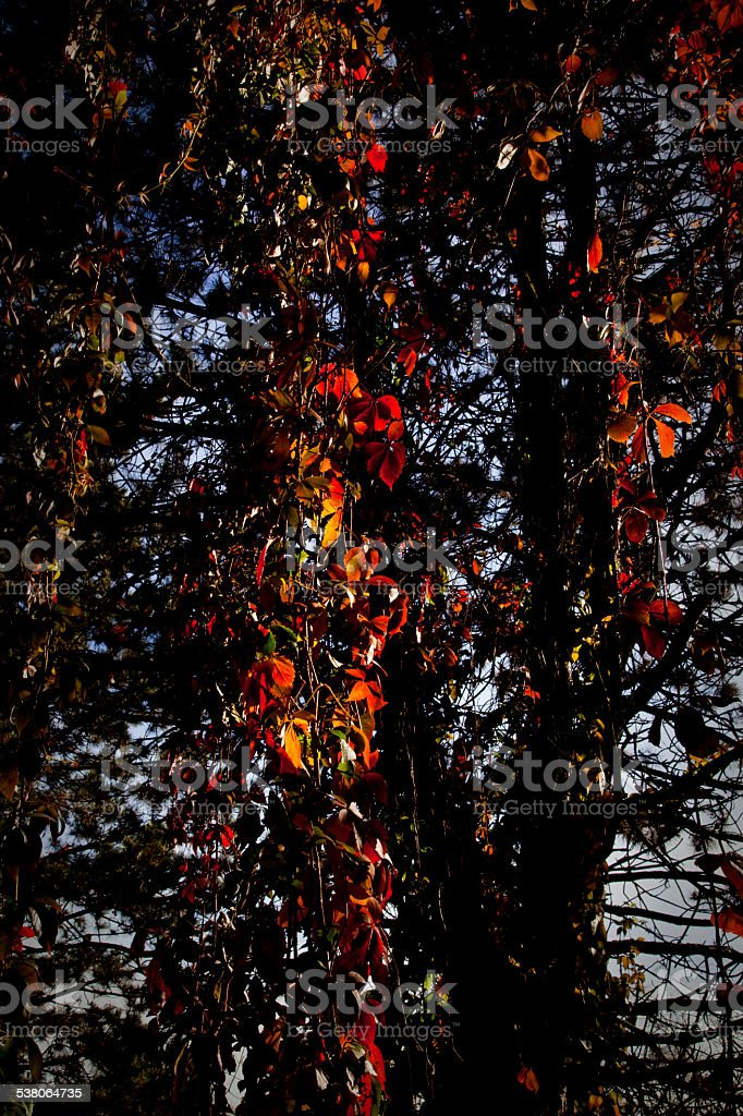 Fall in Kutna Hora stock photo