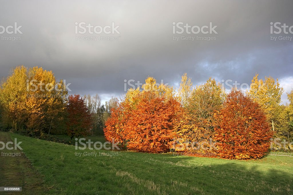 Fall in the Netherlands royalty free stockfoto