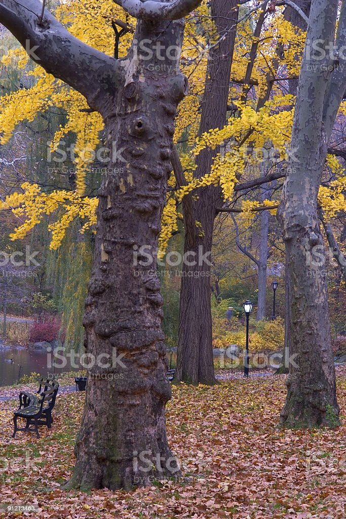 Fall in the park royalty-free stock photo
