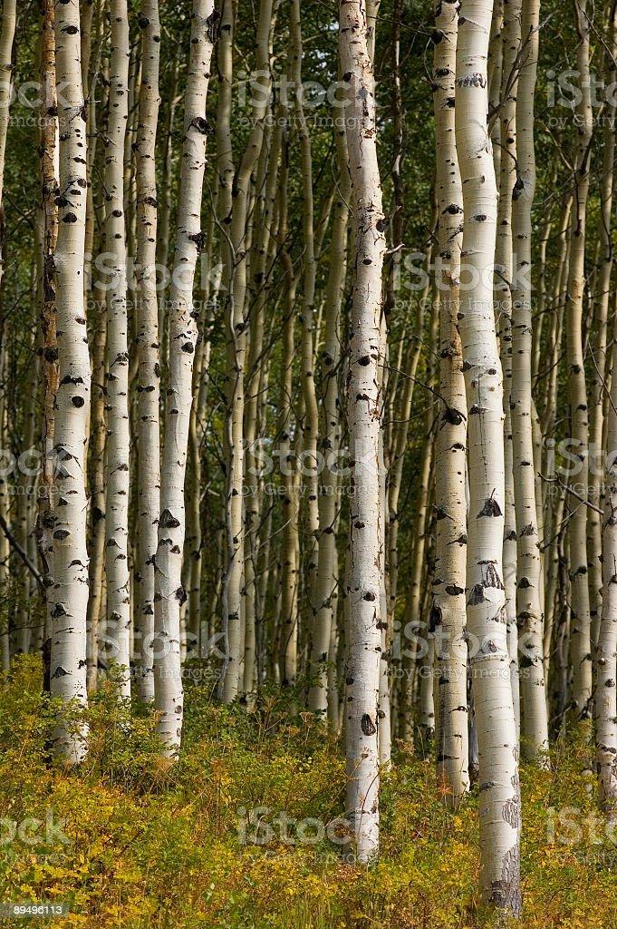 Fall in the Rockies III royalty free stockfoto