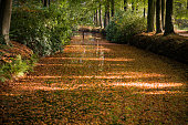 istock Fall in the woods of holland 903697178