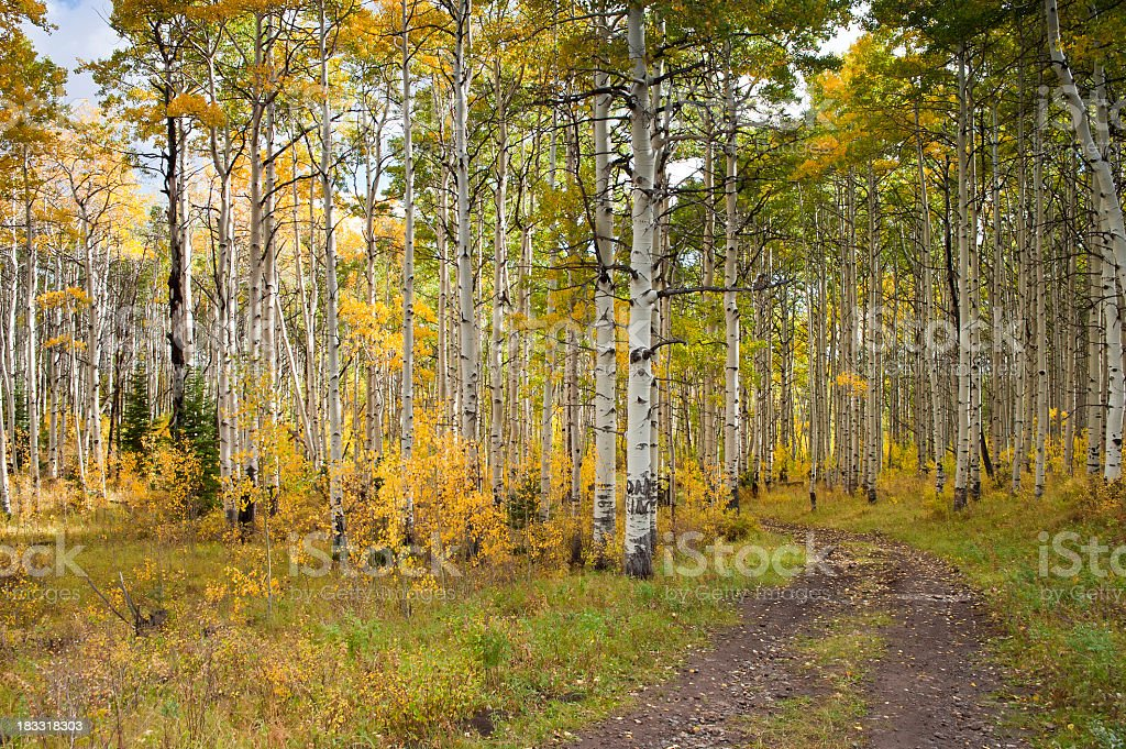 Fall in wilderness area with old dirt road stock photo