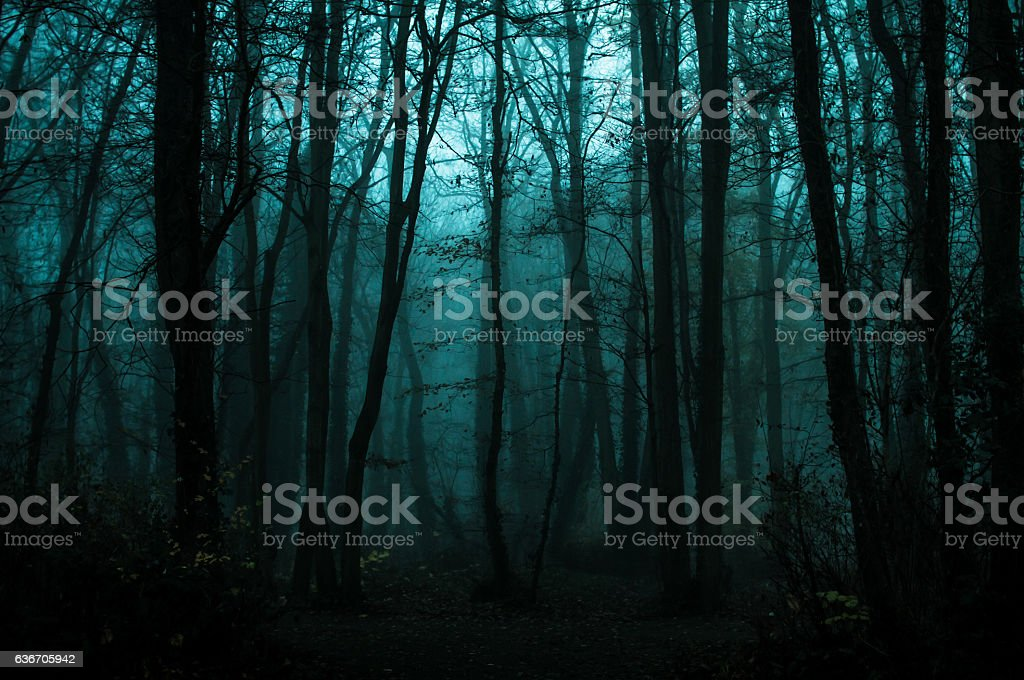fall in woods stock photo