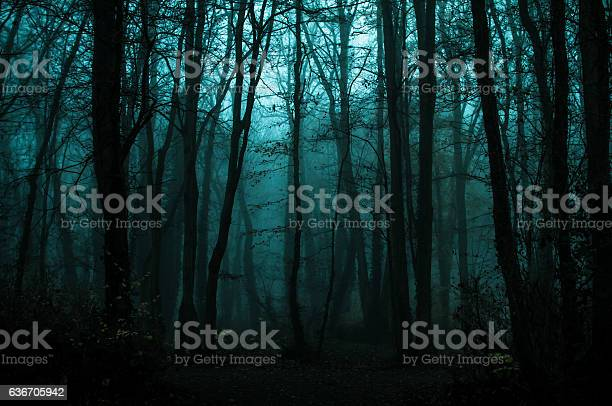 Photo of fall in woods