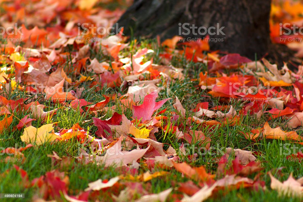 Fall is Here - Leaves on the Ground stock photo