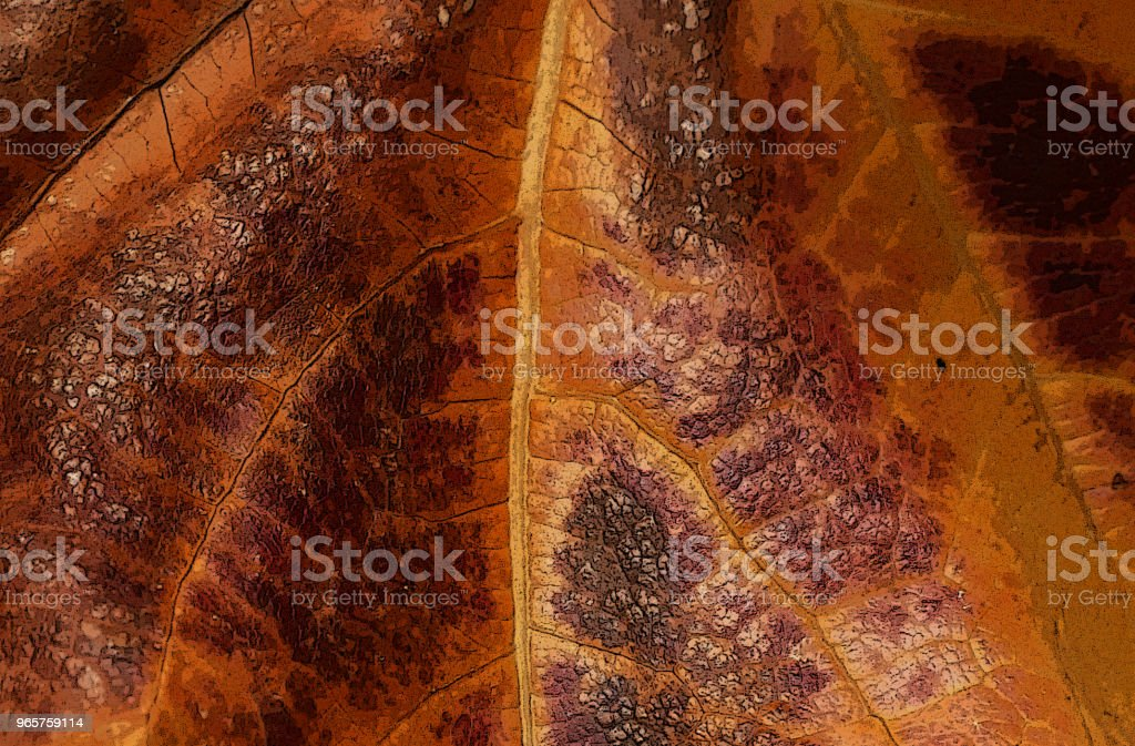 GARDEN SCENE Fall Ivy on Fence - Royalty-free Architecture Stock Photo