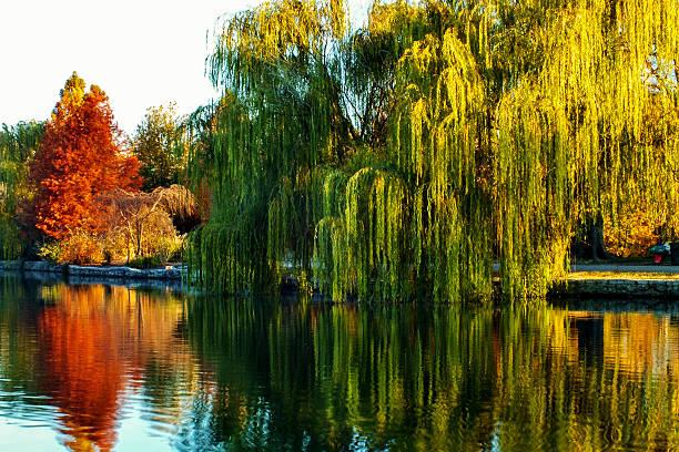 Fall Lake at Centenial Park stock photo