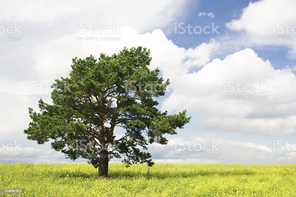 Fall landscape royalty-free stock photo