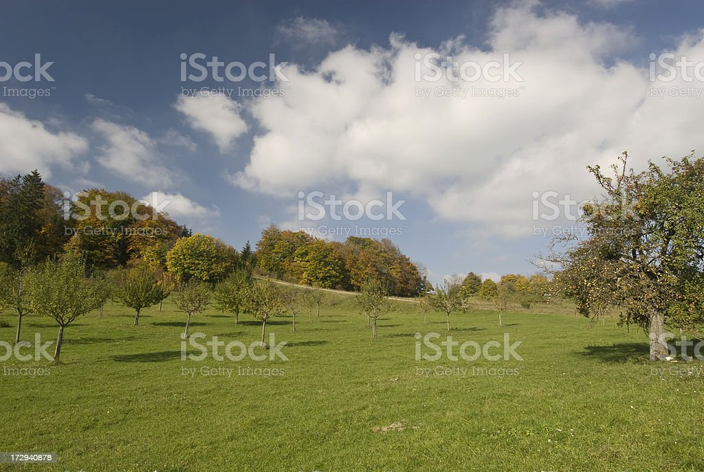 Fall Landscape with apple tree stock photo