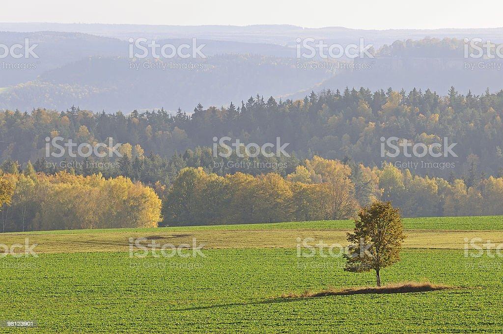 Paesaggio autunnale con Albero solitario foto stock royalty-free