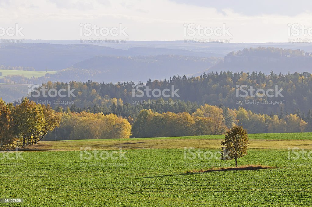 Fall landscape with lone tree royalty-free stock photo