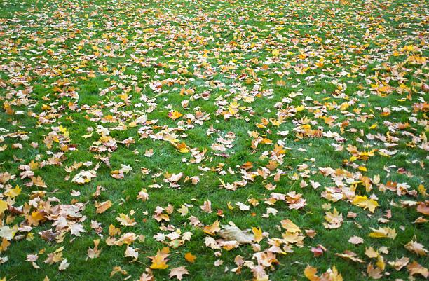 Fall Lawn stock photo