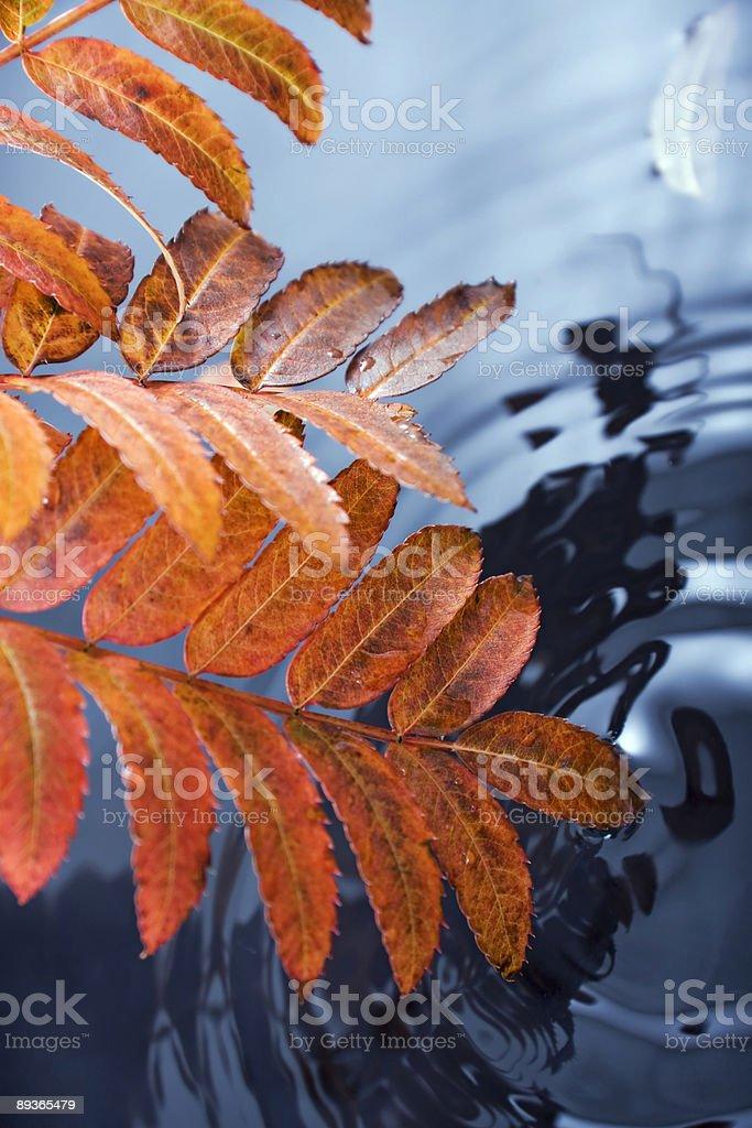 秋の葉とウォーター ロイヤリティフリーストックフォト