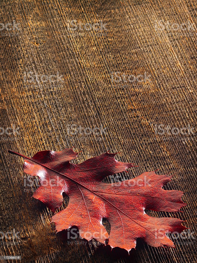 Fall Leaf royalty-free stock photo