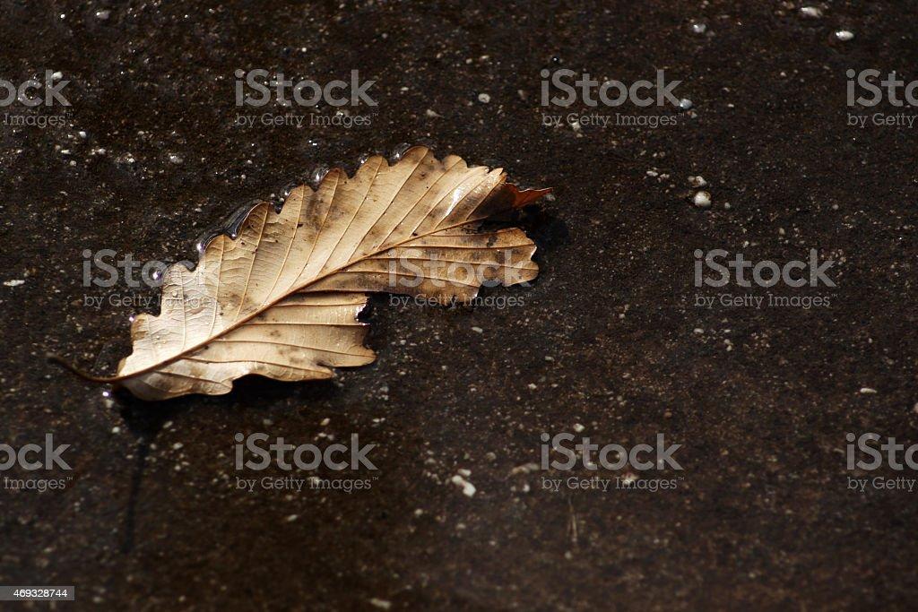 Fall Leaf stock photo