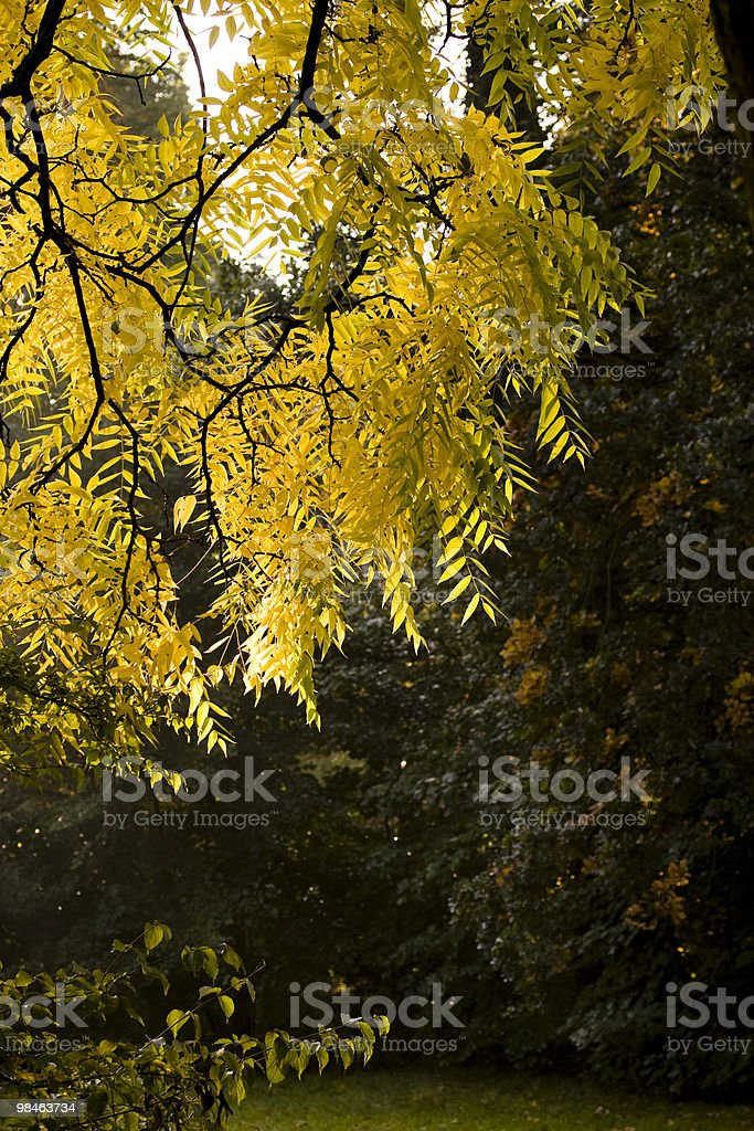 Fall leafs royalty-free stock photo