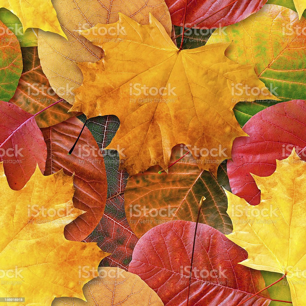 Fall leafs seamless background. royalty-free stock photo