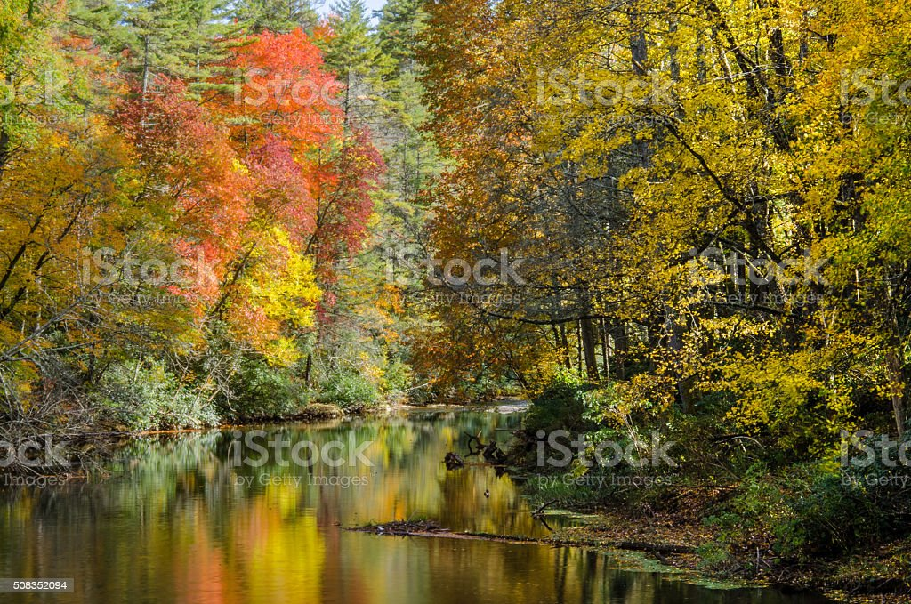 Fall leaves along Linville River stock photo