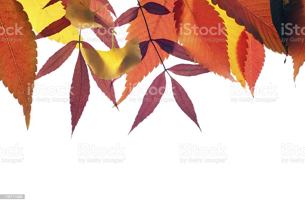 fall leaves background royalty-free stock photo