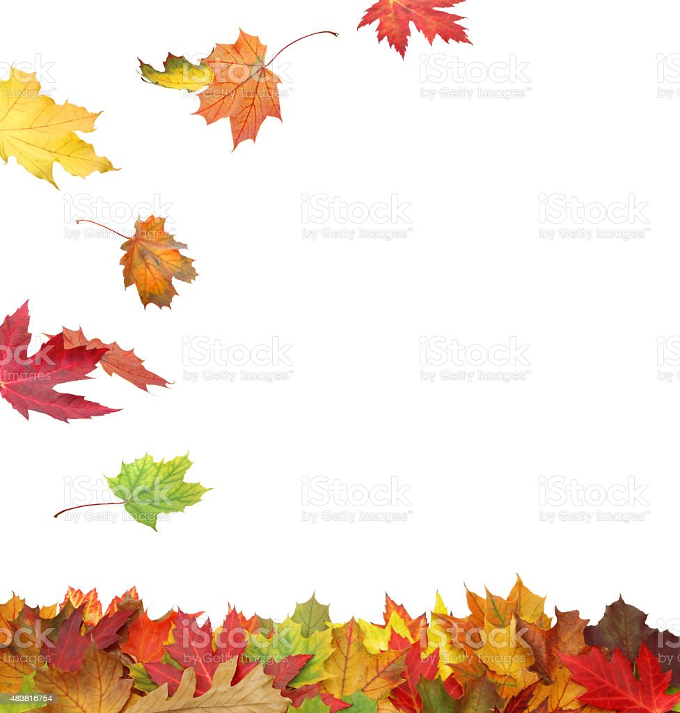 Fall Leaves Border (with path) stock photo