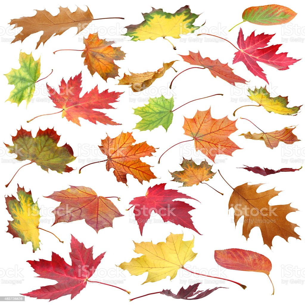 Fall Leaves Collection (with path) stock photo