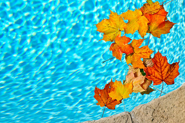 Fall leaves floating in pool stock photo